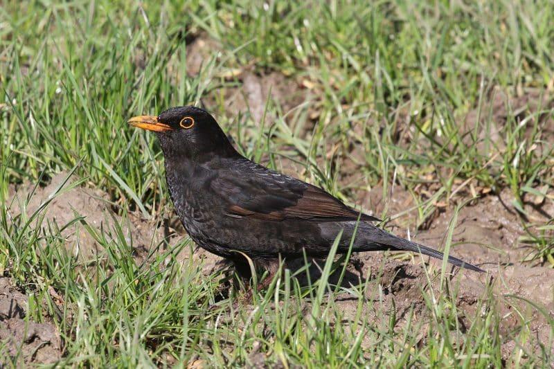Tier-Tracking bei Vögeln: Besondere Herausforderungen beim Akku